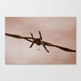 Spider on Barbed Wire Canvas Print