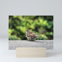 Little Feather Tasting Mini Art Print