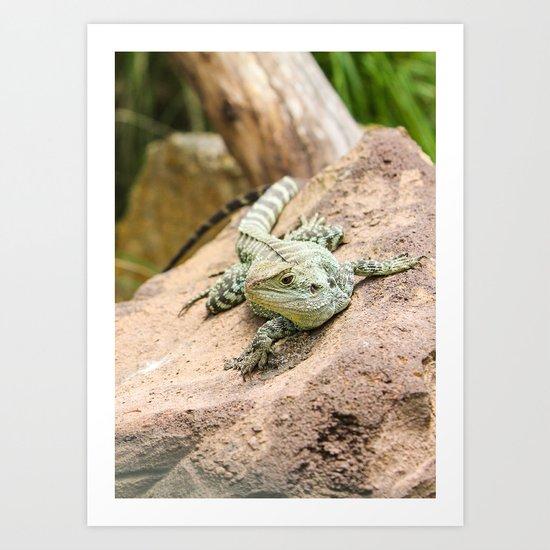 Lizard's Rest Art Print