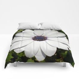 Beautiful Blossoming White Osteospermum  Comforters