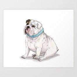 English Bulldog with Blue Scarf Art Print