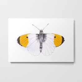Yellow Tipped Butterfly Metal Print