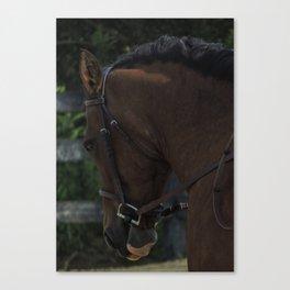 Horse show Canvas Print