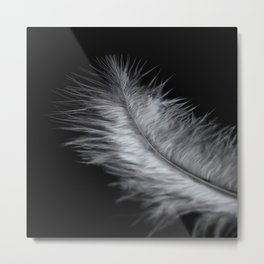 feather in white Metal Print