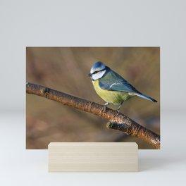 Wildlife Blue tit bird Mini Art Print
