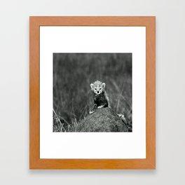 BABY - TIGER - NATURE - LANDSCAPE - ANIMALS Framed Art Print