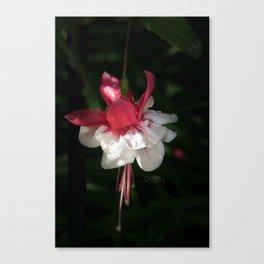 June Fuchsia Canvas Print