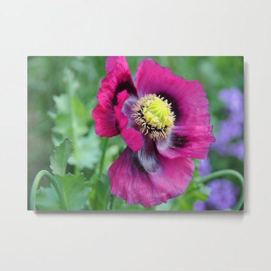 Poppy flower Metal Print