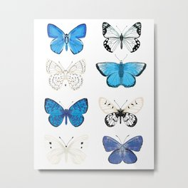 Butterflies - blue and white, butterfly art, blue and white art, butterfly sticker, butterflies Metal Print