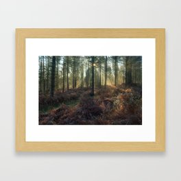 Misty Winter Woodland - II Framed Art Print