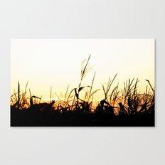 Maizal Canvas Print