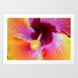 Fiesta Hibiscus Up Close Art Print