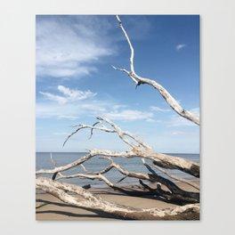 Drifting / Big Talbot Island, Florida Canvas Print