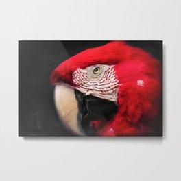 scarlet macaw - ara macao Metal Print