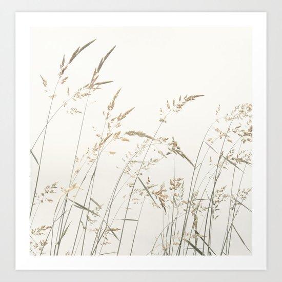 Field Grass Art Print