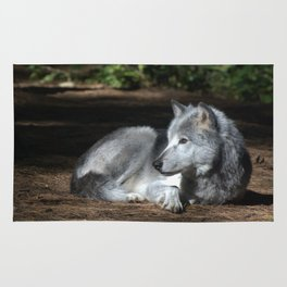 Gray Wolf at Rest Rug