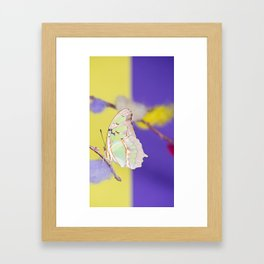 Tropical butterfly sitting on the colored bush over yellow and purple background Framed Art Print