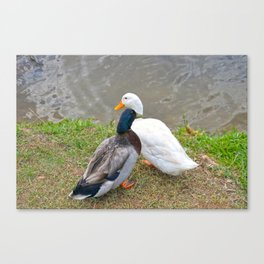 Duck Friends Canvas Print