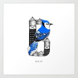 Blue Jay - NYC Birds Alphabet Art Print