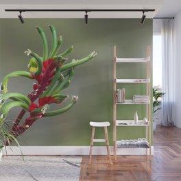 Australian Kangaroo Paw Flower Wall Mural