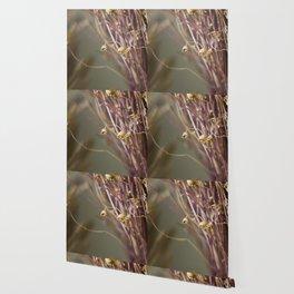 Dry flowers Wallpaper