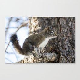 Little Red Squirrel Canvas Print