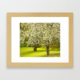 Flowering Apple Trees Framed Art Print