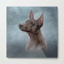 Drawing Xoloitzcuintle - hairless mexican dog breed Metal Print