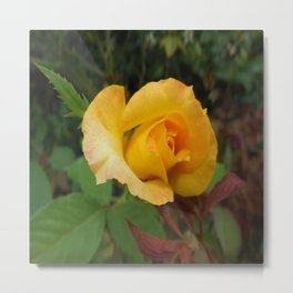 Yellow Rose of TEXAS Metal Print