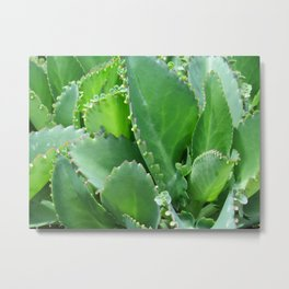 Succulent Leaves Metal Print