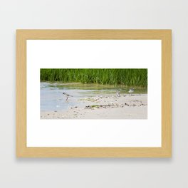 Playing in the tide Framed Art Print