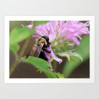Bee in the Bee Balm Art Print
