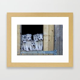 Husky puppies Framed Art Print