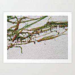 like vines Art Print
