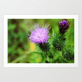 Thistles Art Prints For Any Decor Style Society6