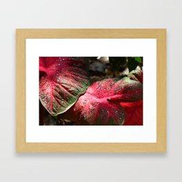 Tropical Rain - Botanical Art by Sharon Cummings Framed Art Print