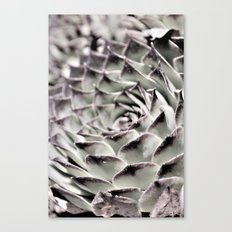 Succulent Close-Up Canvas Print