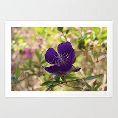 Lavender Petals Art Print