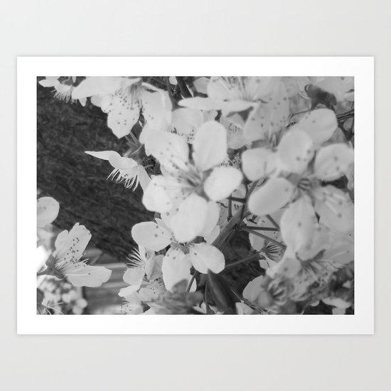Places in Black & White: Plum Tree 12 Art Print