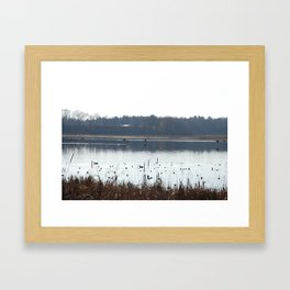 Ducks flying low over water in Massachusetts.  Framed Art Print