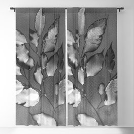 Cyanotype 001 - Black & White Blackout Curtain