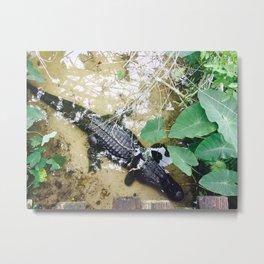 Three Legged Alligator Metal Print