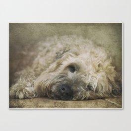 Wheaten Terrier - Let Sleeping Dogs Lie Canvas Print
