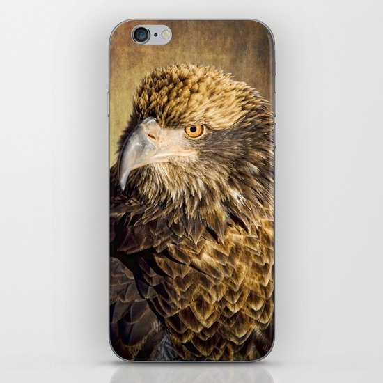 Fine Feathered Friend iPhone & iPod Skin