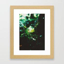 Forest Steps Framed Art Print
