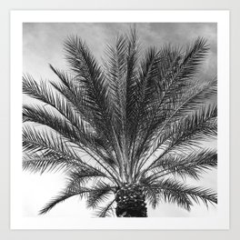 Palm Tree In Noir With Tropical, Brooding Sky Art Print