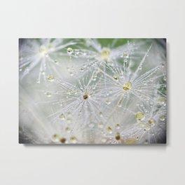 Dandelion Water Drop Macro 9 Metal Print