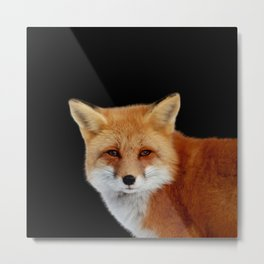Fox (black background) 1 Metal Print