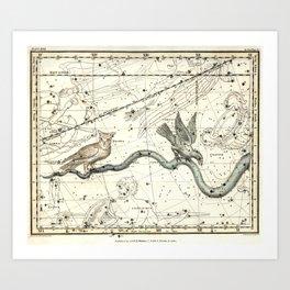Corvus, Noctua, Hydra Constellations Plate 27, Alexander Jamieson Art Print