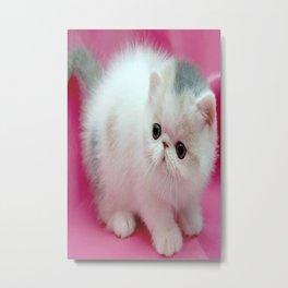 beyaz kedi Metal Print